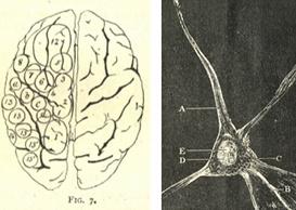 PhrenologicalMagazineNeuroanatomy